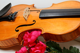 Fiddle and Flowers a violin and red flowers